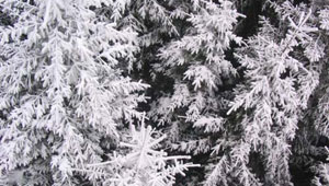 ЕкоЛогично - Eco Snow Session 2005
